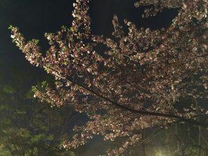 2018.04.03 お花見BBQ_180406_0001