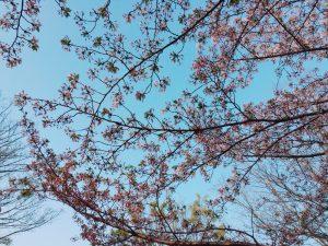 2018.04.03 お花見BBQ_180406_0030